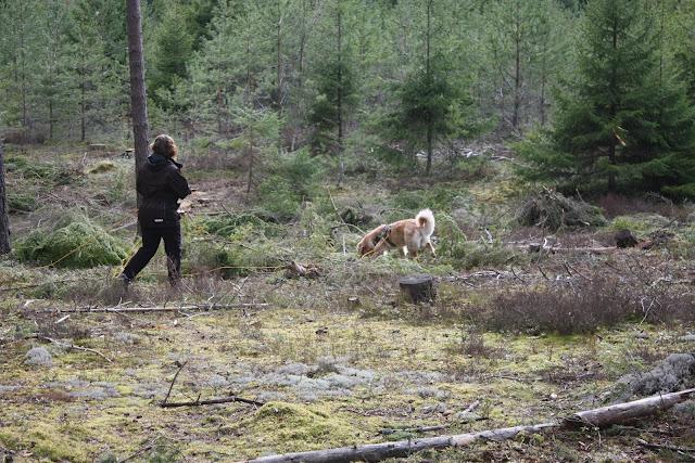 Molly spårar och Annika hänger på, foto: Nina Carlborg
