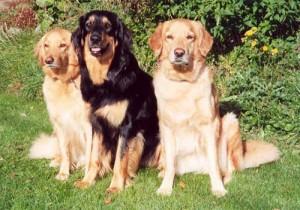 Tosca, Agge och Qocos